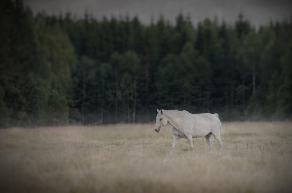 Häst Rud Forshaga